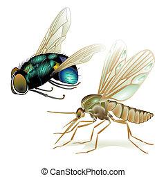 flyver, mygge