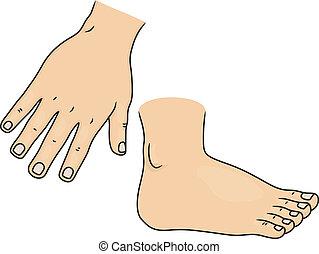 fod, krop rolle, hånd