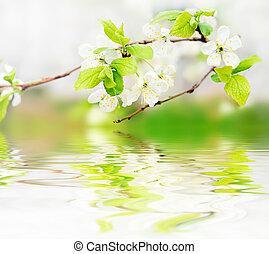 forår blomstrer, bølger, branch, vand