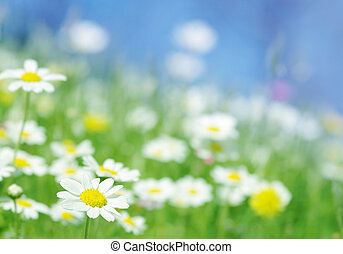 forår blomstrer