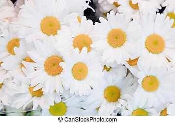 forår blomstrer, blød, baggrund