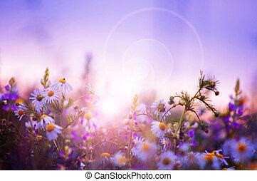 forår blomstrer, felt