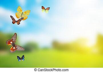 forår, buttefly, farverig, felt