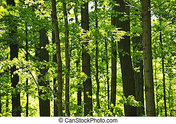 forår, grønnes skov