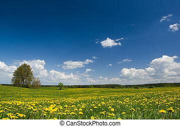 forår, landskab.