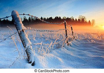 forkølelse, varm, solnedgang, vinter