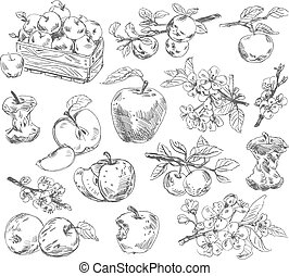 freehand, affattelseen, æbler