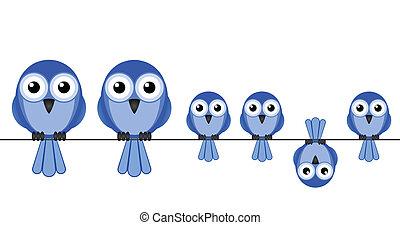 fugl, familie