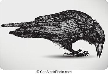fugl, illustration., vektor, sort, hand-drawing., ravn