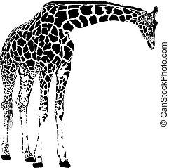 giraf, vektor