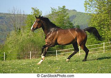 græsgang, hest