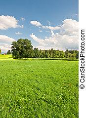 græsgang