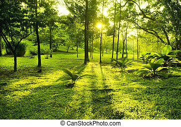 grønnes parker, træer