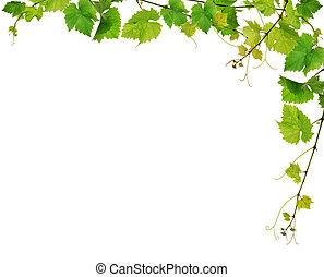 grapevine, frisk, grænse