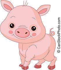 gris, morskab, zoo.