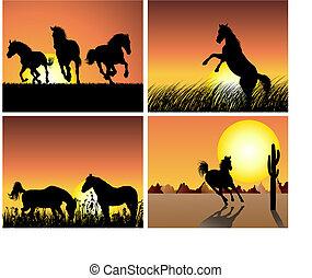 hest, solnedgang, baggrund