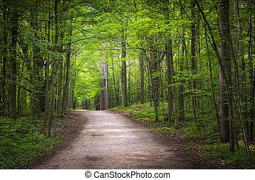 hiking, skov, grønne, trail
