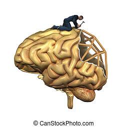 hjerne, genopbygning