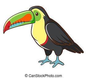 hvid baggrund, toucan