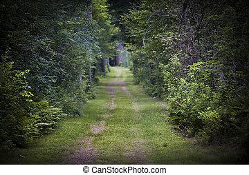 igennem, skov, vej, snavs