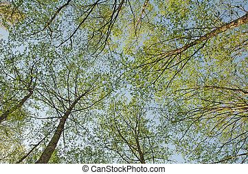 imod, blå himmel, fotografer, træer, grønne, brøl