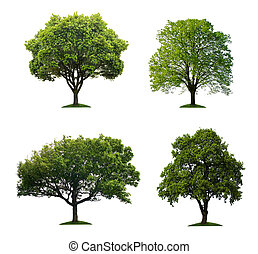isoleret, træer