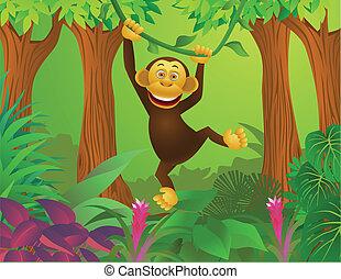 jungle, chimpanse