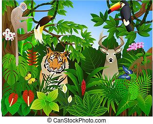 jungle, dyr