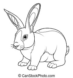 kanin, coloring, side