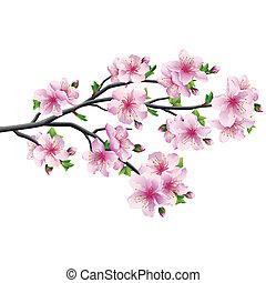 kirsebær blomstr, træ, sakura, japansk