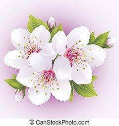 kirsebær, blomstre, træ, japansk, sakura, branch-