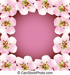 kirsebær, ramme, blomstre, -, japansk, træ, sakura