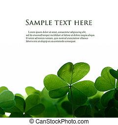 kløver, arealet, text., grønne, det leafs, grænse