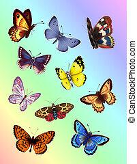 klar, sommerfugle