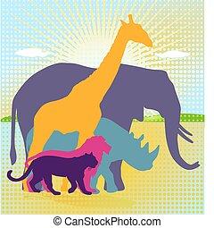 kongerige, dyr, afrikansk