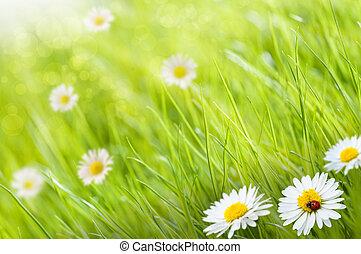 kopi, daisies, ladybird, arealet, denne, solfyldt, image, græs, -, æn, baggrund, venstre, blomster, dag, blurry, side