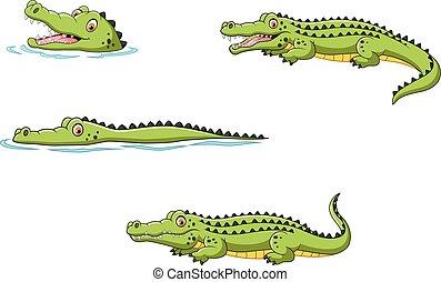 krokodille, sæt, samling