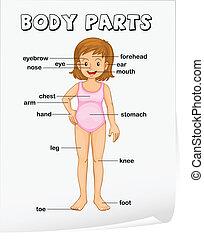 krop rolle