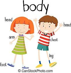 krop rolle, menneske, diagram