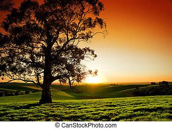 landlige, solnedgang