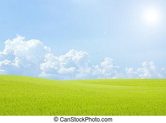 landskab, felt, baggrund, himmel sky, blå grønnes, ris, græs