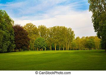 landskab., sommer, træer, grønnes felt, smukke