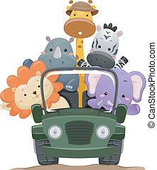 lastbil, safari, dyr