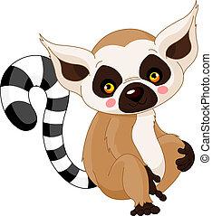lemur, morskab, zoo.