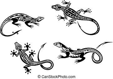 lizard, reptiler