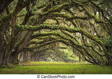 lowcountry, ener, landskab, eg, træer, beplantningen, levende, skov, sc, charleston, ege, aveny, bassin, syd carolina