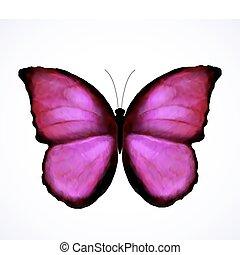 lyserød, sommerfugl, klar, vektor, isolated.