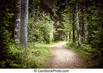 mørke, sti, skov, tungsindige