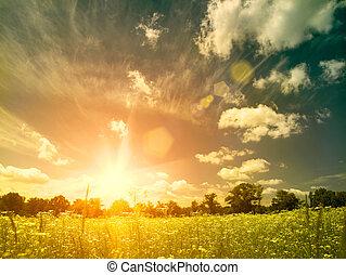 meadow., sommer, naturlig skønhed, hen, baggrunde, klar, solnedgang, vild, chamomile, blomster