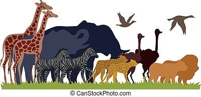 migrate, silhuet, dyr, safari